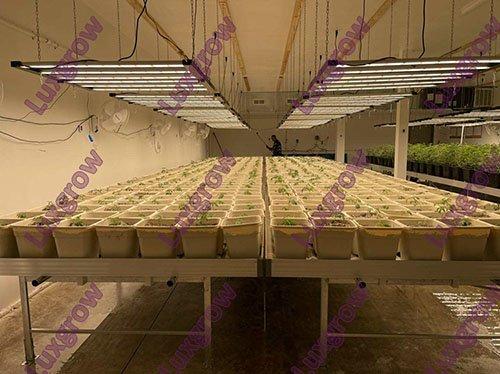 grow light project 3