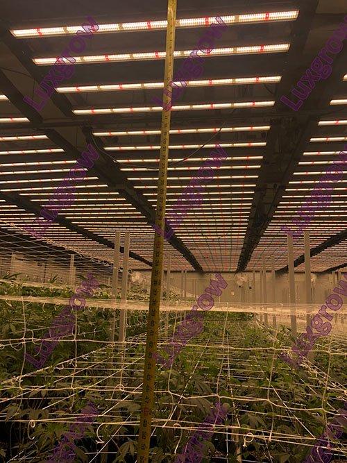 grow light project 9